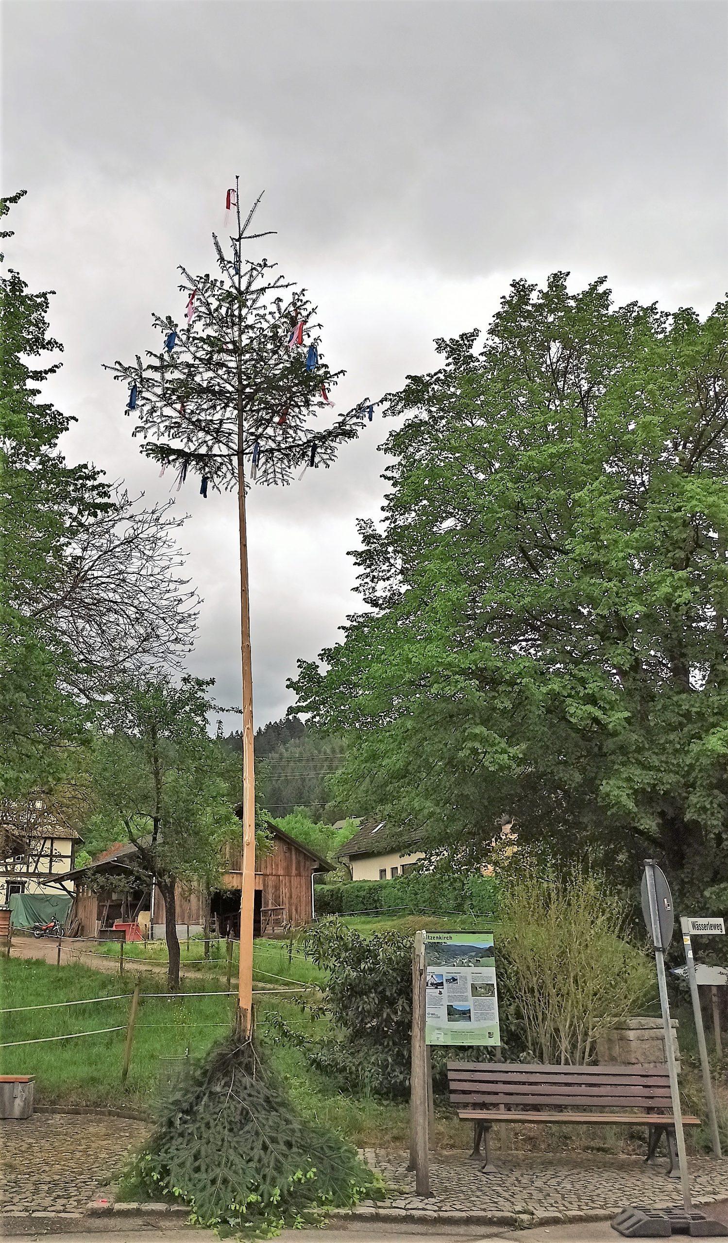Corona-Maibaum in Sitzenkirch
