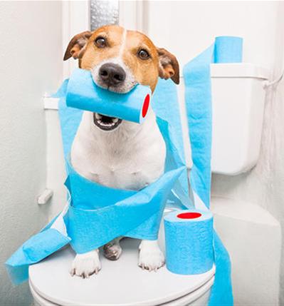 Hundetoiletten für Sitzenkirch
